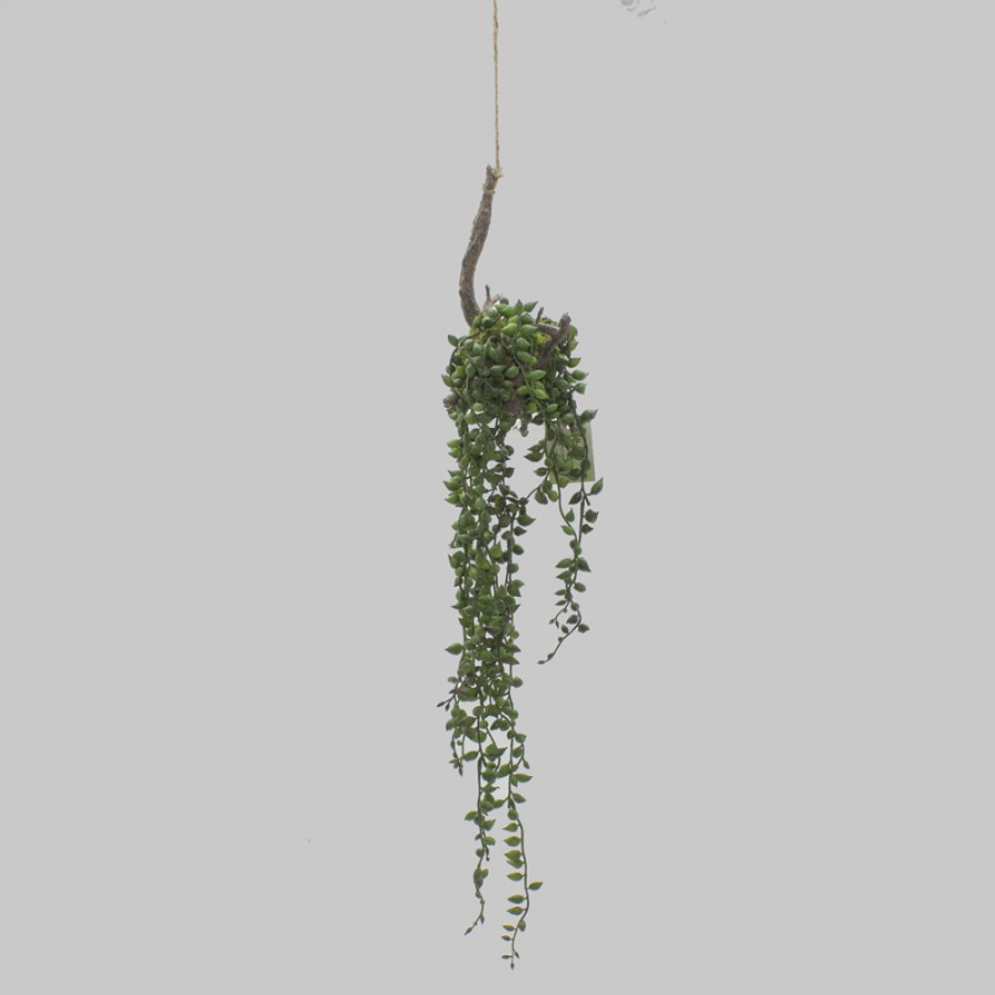 PEARL SUCCULENT HANGING ROOT DECORATION