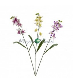 ORCHIDEA CRISTINA COLORI ASSORTITI H.76CM