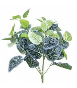 FITTONIA BUSH WHITE GREEN