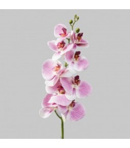 ORCHID SINGLE