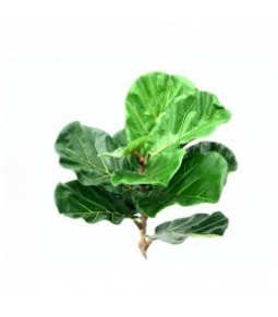 77,50CM FIDDLE LEAF SPRAY GREEN