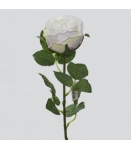 ENGLISH ROSE L.65CM 1WHITE 24 240PZ