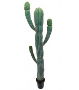 H205CM DESERT CACTUS IN POT GREEN