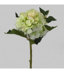 PROVENZA SHORT CUT HYDRANGEA LT GREEN